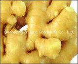 Chinese Fresh Ginger in Bottom Price