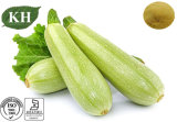Manufacture Natural Cucurbita Pepo Extract 5: 1 Zucchini Extract