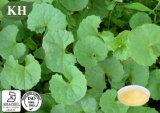 Caring Skin Asiaticoside 3%-90% Gotu Kola Extract