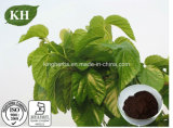 Diabetes Therapy Mulberry Leaf Extract 1-Deoxynojirimycin (1-DNJ) 1%-15% by HPLC