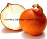 Fresh Yellow Onion with Competetive Price