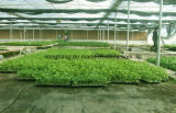 Hot Selling Top Quality PP Weed Control Material
