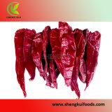 American Red Chili Whole