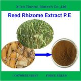 High Quality Best Price Pure Natural Reed Rhizome Extract Powder