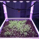 515*48*21mm Patented Plants LED Grow Light