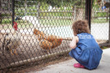 Sailin PVC Coated Chain Link Fence Chicken Wire Mesh