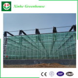 Intelligent Multi Span Float Glass Greenhouse for Ecological Restaurant