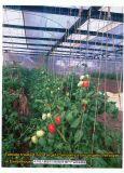 Unigrow Bio Fertilizer for Tomato Planting
