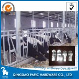 Galvanized Steel Free Stall Cubicle for Dairy Cows