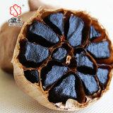 Superior Quality Good Price China Black Garlic