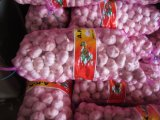 New Crop Fresh Natural Pure White Garlic