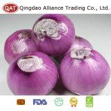 Purple Peeled Top Quality Onion