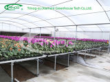 Economical Multi-Span Film Agricultural Greenhouse