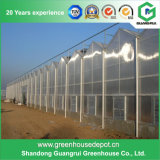 Multi-Span Venlo Polycarbonate Industrial Agricultural Commercial Greenhouses for Growing Business
