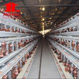 Steel Galvanized Automatic 4 Tiers Layer Chicken Cage System