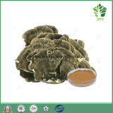 Immunity Enhancing Herbs Coriolus Versicolor Extract Powder with Polysaccharide