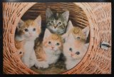 Printed Non-Woven Door Mat, with Eye-Catching Colorful Cat Patterns