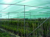Green Shade Cloth/Shading Net/Green Sun Shade Net