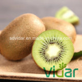 Fresh Sweet Kiwi Fruit for Exporting