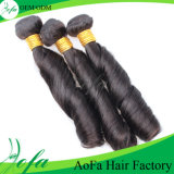 Competitive Price Spring Curly Brazilian Virgin Human Hair