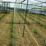 Plant Support Net for Cucumber/Bean