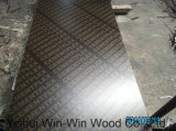 Plywood for Construction Concrete Usage CE Carb SGS Certified