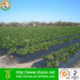 Blowing PE Black Mulch Film for Agriculture or Horticulture