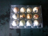 China Clear Pet Plastic Egg Trays for Quail Eggs
