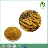 Factory Direct Supply Cordyceps Mycelia Extract 10%~40% Polysaccharides