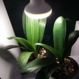LED Lighting for Plant Blooming Booster