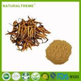 Traditional Chinese Medicine Summer Grass-Winter Worm