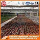 Vegetables/Garden/Flowers/Farm Plastic Film Green House