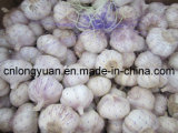 Exporting Standard Chinese Normal White Garlic