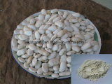 Factory Natural White Kidney Bean Extract Powder