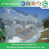 Agricultural Plastic Fim Greenhouse for Tomato Plantring