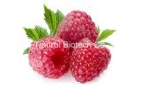 Raspberry Juice Powder /Raspberry Powder/Raspberry Extract Powder