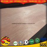 12/15/18mm Plywood with Compentition Price