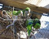 Kdl Birds Aviary Rope Mesh
