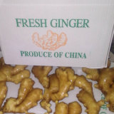 Top Quality of Chinese Fresh Ginger