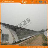 Hot Sale Solar Green House for Vegetable Planting