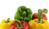New Crop Red Bell Pepper (10cm)