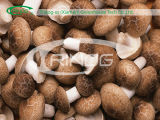 Commercial mushroom production farm for sale