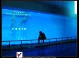 Hot Sale! Acrylic Aquarium Fish Tanks