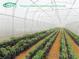 Economical Tunnel greenhouse for Seeding