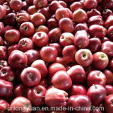 20kg Carton Packing Fresh Red Delicious Apple