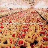Full Set High Quality Breeder House Poultry Equipment