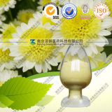 Factory Direct Supply High Quality Natural Chrysanthemum Extract