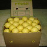 Exported Quality of Chinese Fresh Lemon/