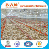 Automatic Poultry Equipment for Broiler Chicken Production