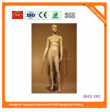 High Quality Fiberglass Mannequins Torso 9237
